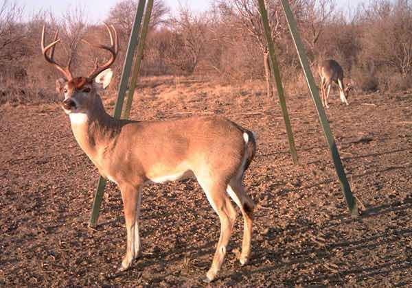 guided deer hunts in texas